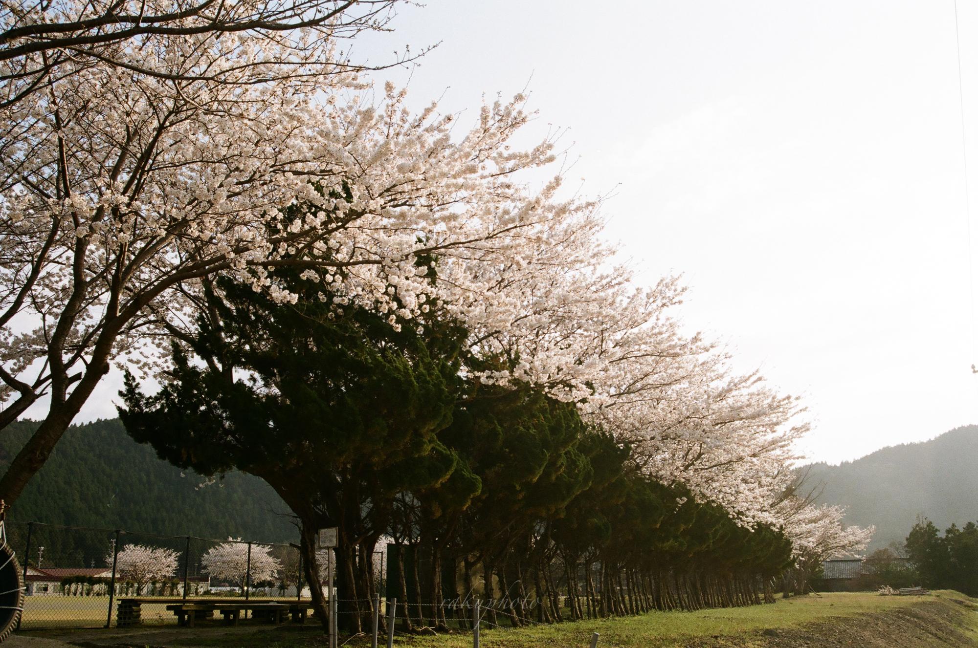 f:id:asanokawa:20210419142126j:plain