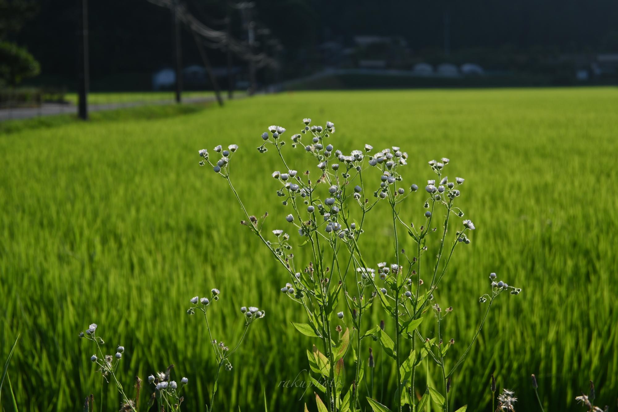 f:id:asanokawa:20210723195003j:plain