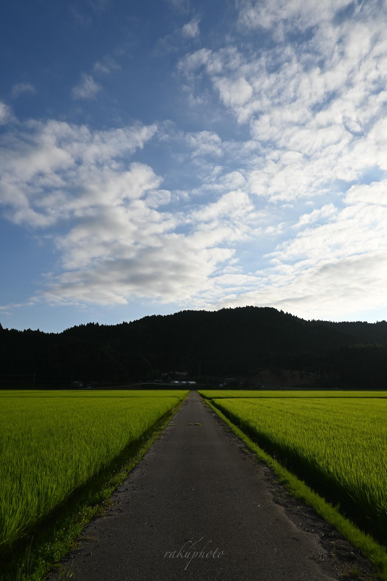 f:id:asanokawa:20210803171343j:plain