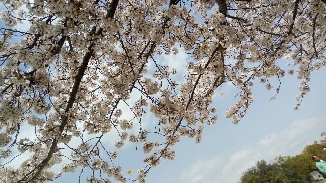 f:id:asanoomusubi:20180401163620j:image