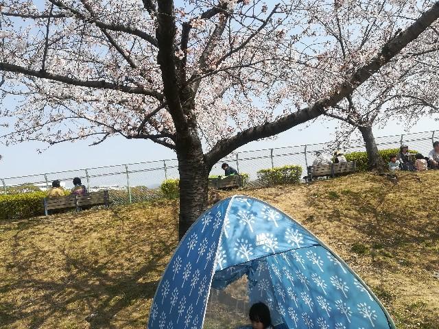 f:id:asanoomusubi:20190407045446j:image