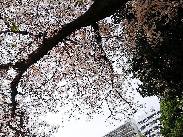 f:id:asanoomusubi:20190414041801j:image