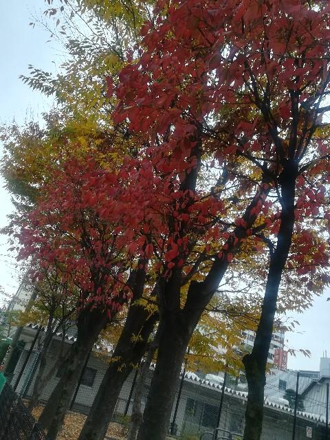 f:id:asanoomusubi:20191124155307j:image