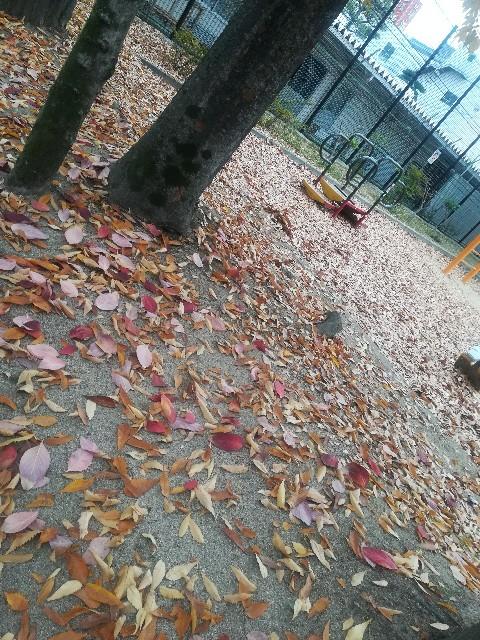 f:id:asanoomusubi:20191124155407j:image