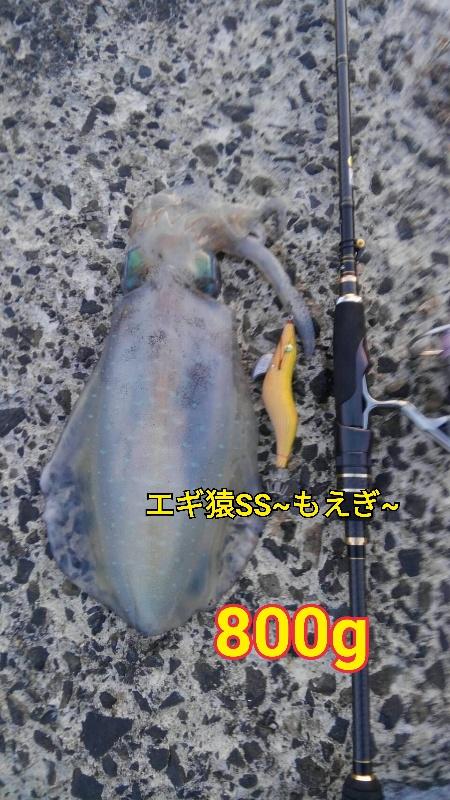 f:id:asanotsurigu:20190517212930j:plain