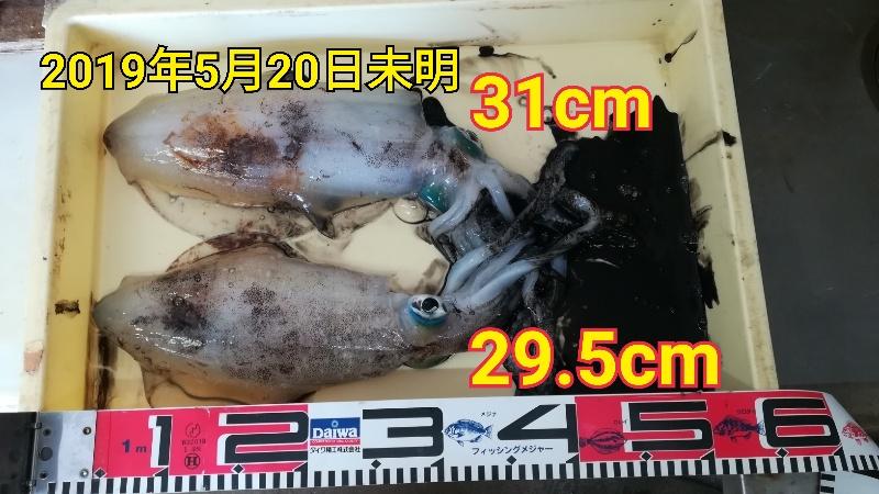 f:id:asanotsurigu:20190520115223j:plain