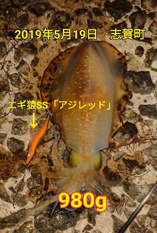 f:id:asanotsurigu:20190520164031j:plain