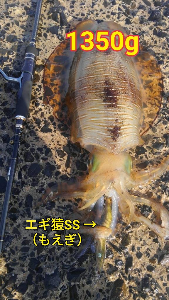 f:id:asanotsurigu:20190523212825j:plain