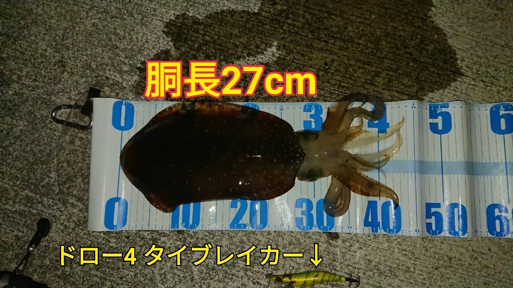f:id:asanotsurigu:20190523214822j:plain