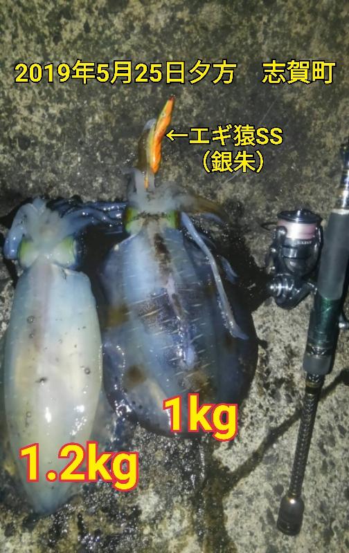 f:id:asanotsurigu:20190525214151j:plain