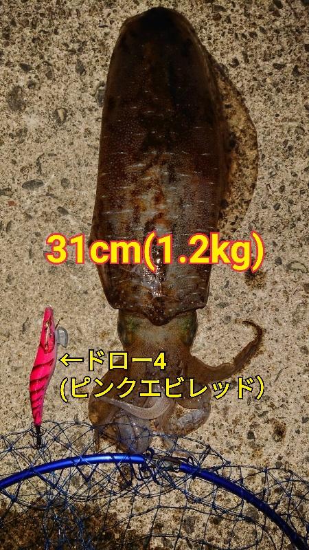 f:id:asanotsurigu:20190527230144j:plain