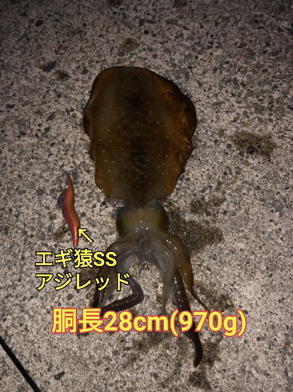 f:id:asanotsurigu:20190604064439j:plain