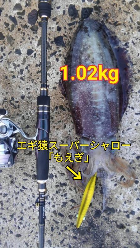 f:id:asanotsurigu:20190620143847j:plain