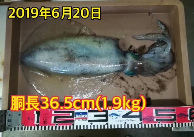 f:id:asanotsurigu:20190620154157j:plain