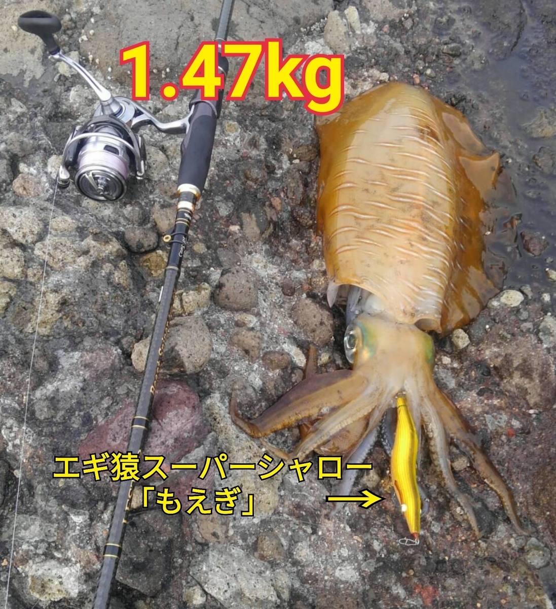 f:id:asanotsurigu:20190622214803j:plain