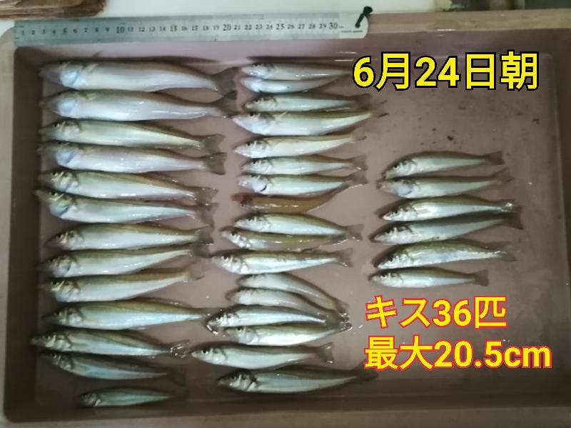 f:id:asanotsurigu:20190624085749j:plain