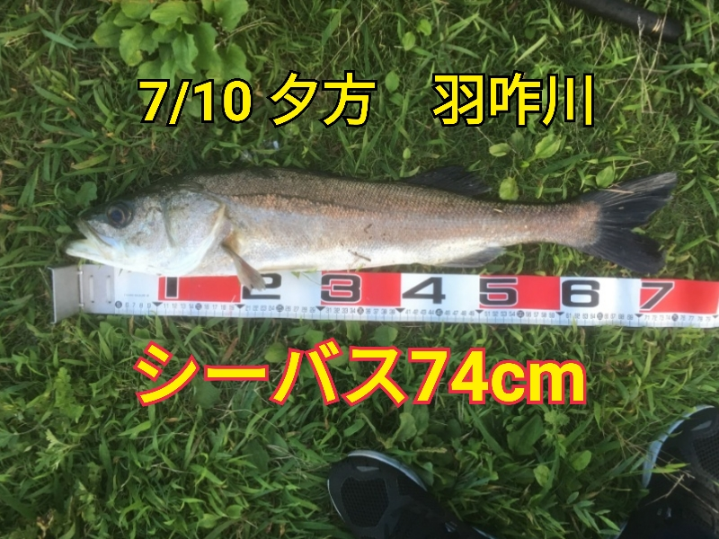 f:id:asanotsurigu:20190710211311j:plain