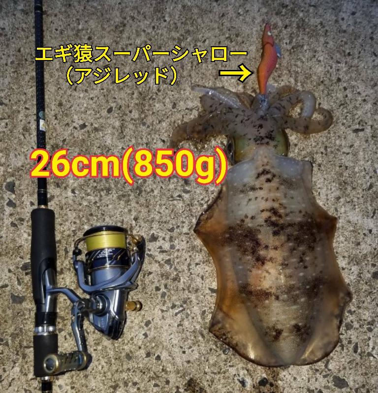 f:id:asanotsurigu:20190714220026j:plain