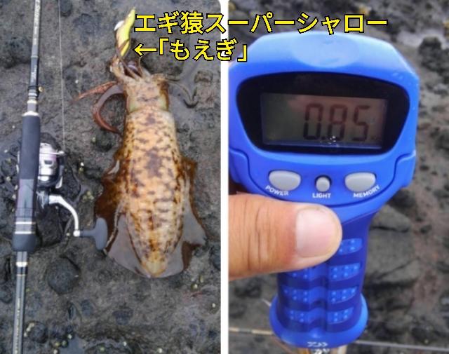 f:id:asanotsurigu:20190720085129j:plain