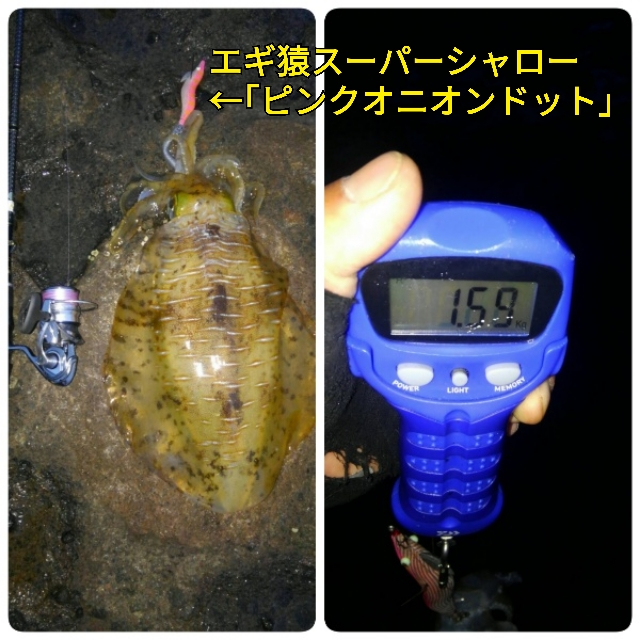 f:id:asanotsurigu:20190721051303j:plain