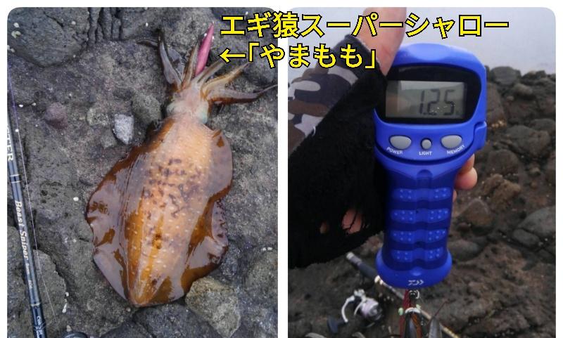f:id:asanotsurigu:20190721084430j:plain