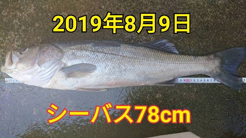 f:id:asanotsurigu:20190809182355j:plain