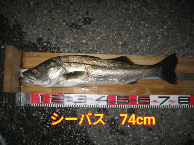 f:id:asanotsurigu:20190920192151j:plain