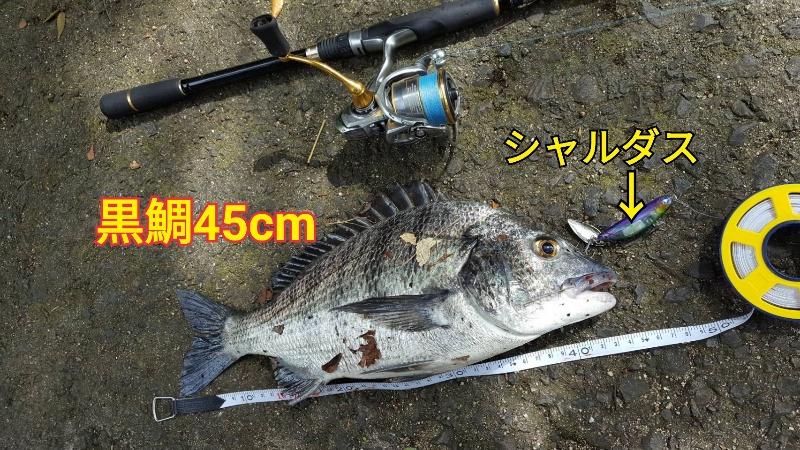 f:id:asanotsurigu:20190923115557j:plain