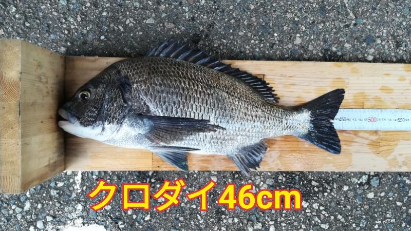 f:id:asanotsurigu:20191027154115j:plain