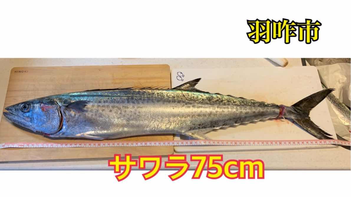 f:id:asanotsurigu:20191106163931j:plain