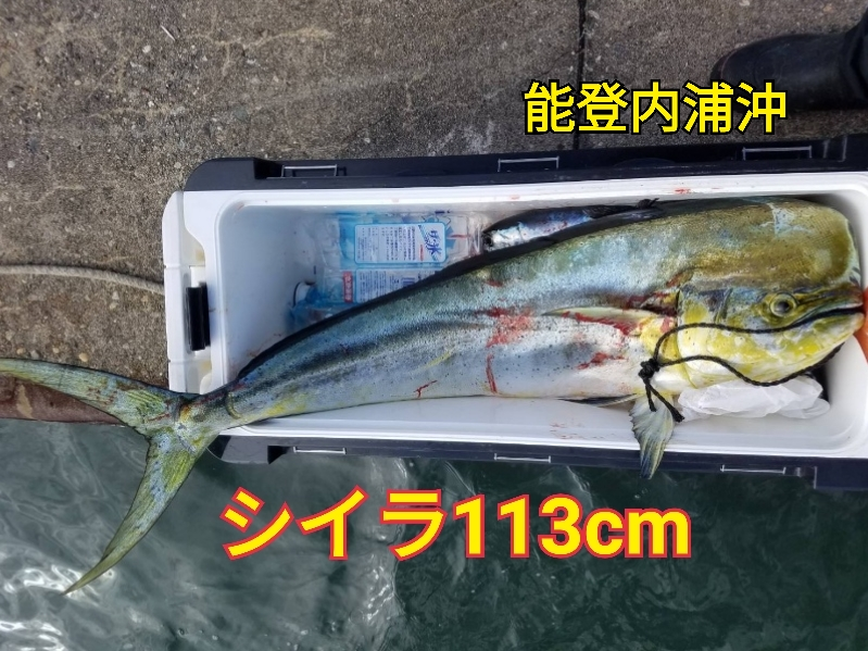f:id:asanotsurigu:20191109145449j:plain