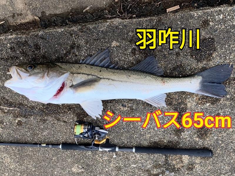 f:id:asanotsurigu:20191117193013j:plain