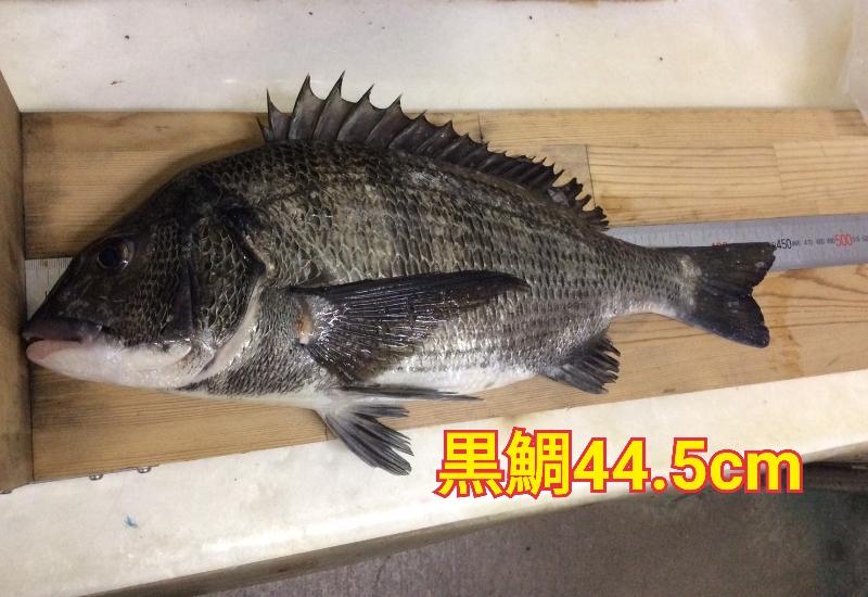 f:id:asanotsurigu:20191224102151j:plain
