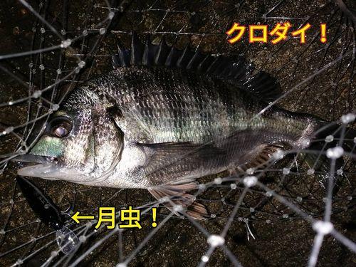 f:id:asanotsurigu:20200320134725j:plain