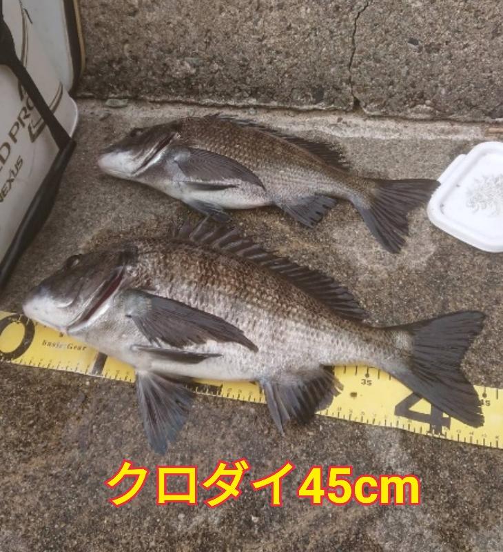 f:id:asanotsurigu:20200412153447j:plain