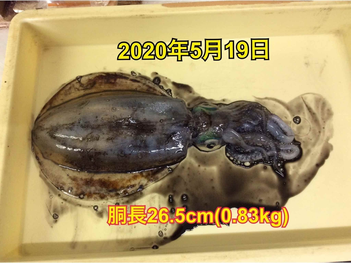 f:id:asanotsurigu:20200519110640j:plain