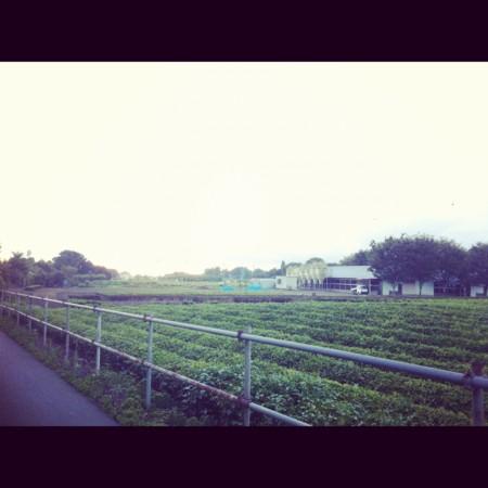 f:id:asayoshi:20120902220723j:image