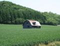 小麦畑の中の廃屋