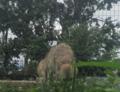 旭山動物園オオカミの森