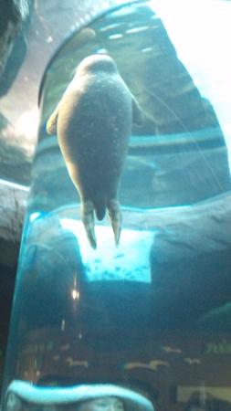 旭山動物園オフ