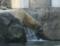 旭山動物園 ホッキョクグマ