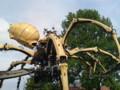 巨大蜘蛛 近影 重くてすいません。。