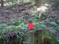 [天台寺]木漏れ日の中のお地蔵様