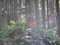 [天台寺]木漏れ日の中のお地蔵様2