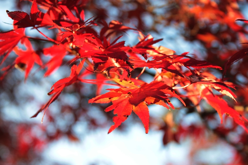 f:id:ashibano:20121119232515j:image