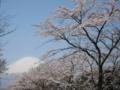 [桜][富士山]