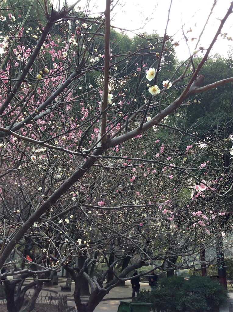 f:id:ashimomi:20170207000010j:image