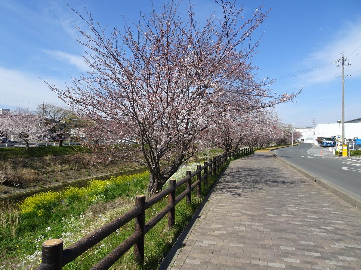 f:id:ashinichi:20190405161357j:plain