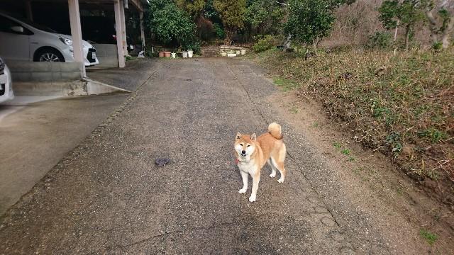 f:id:ashitagatanoshimi:20190717221623j:image