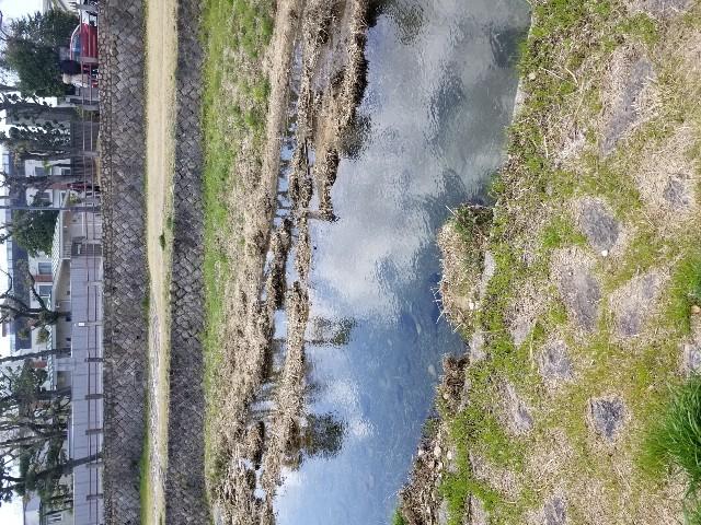 f:id:ashiyamiwa:20200320124436j:image